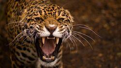 Jaguar wallpaper.jpg
