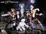 Cats (1998 Film)