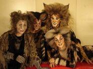 Griz Tanto Tugger Silla - AusAsia 2007