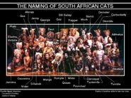 Naming of South African Cats Labelled