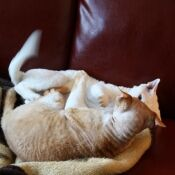 Phoca thumb m oregon cat 2