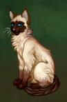Котик1.png