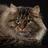 LogicalTrash's avatar