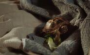 S02E03-Clyde wakes Watson