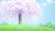 CCSCC EP05 - Sakura found huge tree