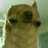 RenDock1864's avatar