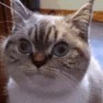 Vertend's avatar