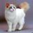 Нежнолапа's avatar