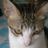 218love's avatar