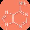 Nucleotides.png