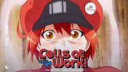 Cells at Work! Season 2 Official Trailer