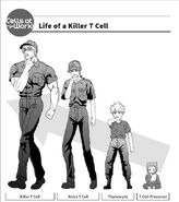 Life of a killer t cell