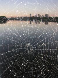 SpiderWebSkyline-1.jpg