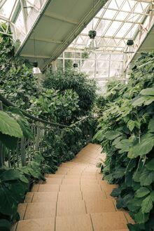 Aesthetic Greenhouse Plants.jpeg