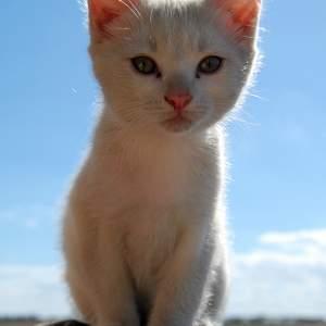 cute kitteh
