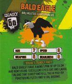 Deadly60Factsheet-Bald Eagle.jpg