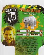 Deadly60Factsheet-Polar Bear