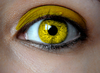 Yellow-Eyes.png