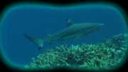 Kemy Expedition Shark.png
