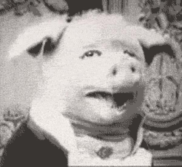Dancing Pig