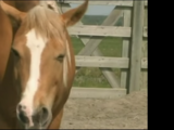 Horse (ABC's Sing-A-Long)