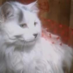 White Cat (Kidsongs)