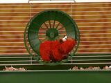 Elmo Hamster