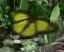 Barney & Friends Butterfly.PNG