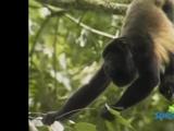 Monkey (Barney & Friends)