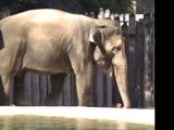 Elephant (Barney & Friends)