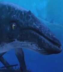 Kia-the-dolphin-story-of-a-dreamer-54.6.jpg