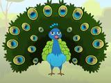 Peacock (HooplaKidz)