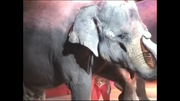 ABC's Sing-A-Long Elephant.png