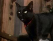 Black Cat (Kidsongs).png