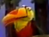 Toucan (Sesame Street)