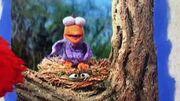 Elmo's World Sleep Birdie.jpg