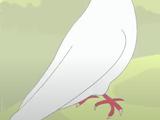 Dove (HooplaKidz)