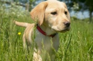 Digger-the-Puppy-©-Rdf-Media-Group-300x198.jpg