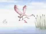 Flamingoes (Charmin)