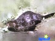 Barney Beaver.jpg