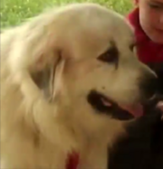 Dog in Preschool Songs.png