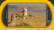 Kemy Expedition Cheetah.png