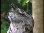 Owl in Wiggly Safari.jpg