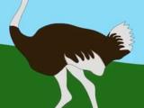 Ostrich (KidsTV123)