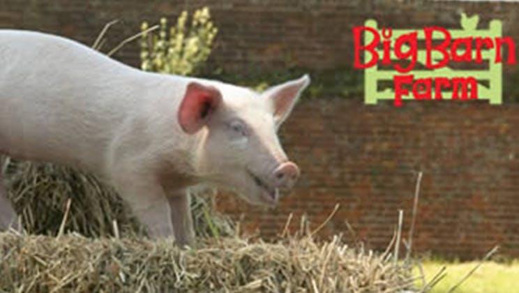Petal the Piglet