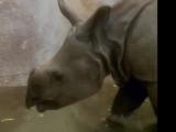 Rhinoceros (Kidsongs)