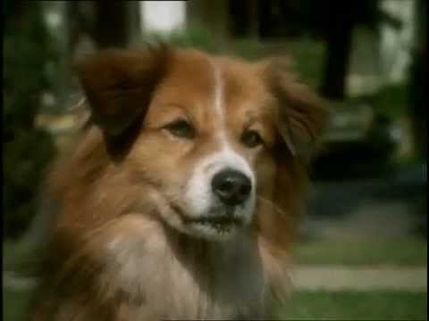 Prologue Dog