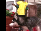 Black Dog (Kidsongs)