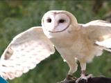 Owl (Barney & Friends)