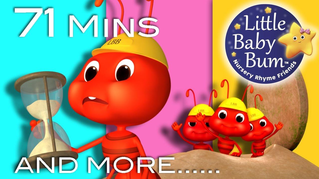 LBB Ants